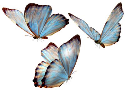 beautiful_butterfly