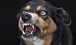 rabies.jpg